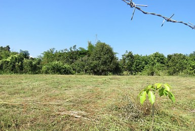 land for sale in Doi Saket
