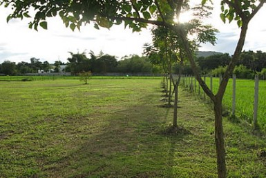 Land near Royal Flora Ratchaphruek for sale