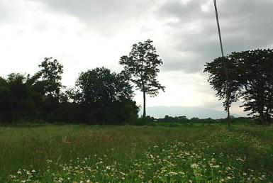 land for sale in San Kamphaeng