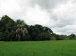 land-sale-chiangmai-ls51 (2)