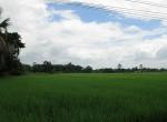 land-sale-chiangmai-ls51 (5)