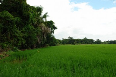land for sale in San Sai
