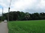 land-sale-chiangmai-ls51 (7)