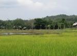 land-sale-chiangmai-ls71 (2)