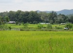 land-sale-chiangmai-ls71 (3)