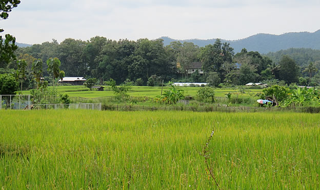 land for sale in Mae On