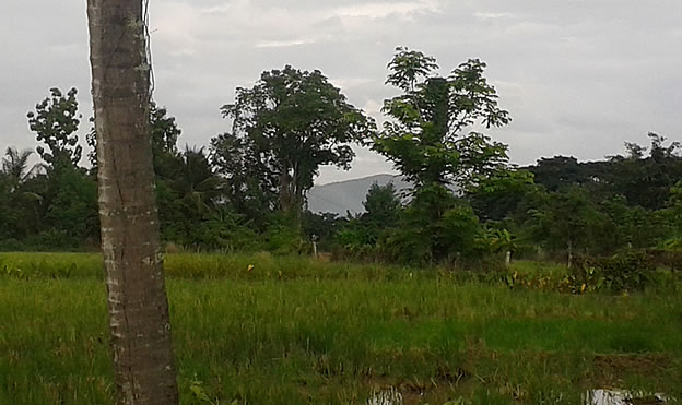 2.5 Rai land in Doi Saket for sale