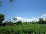 land-sale-chiangmai-ls81 (1)