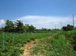 land-sale-chiangmai-ls81 (2)