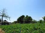 land-sale-chiangmai-ls81 (3)