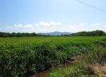 land-sale-chiangmai-ls81 (4)