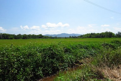 5 Rai land with views for sale in Doi Saket
