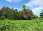 land-sale-chiangmai-ls82 (4)