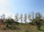 land-sale-chiangmai-ls84 (11)