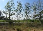 land-sale-chiangmai-ls84 (12)