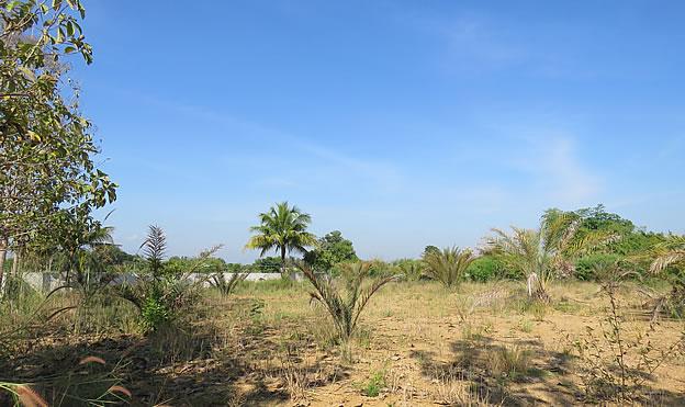 Large building plot for sale in Doi Saket